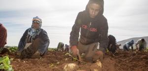 عمال فلسطين. تصوير: بسام المهر