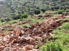 IOF's Noon Operation Uproots 300 Olive Trees near Nablus