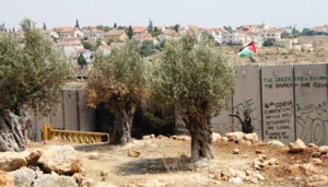Palestinian Farmers Denied Access to their Land in Ni'lin