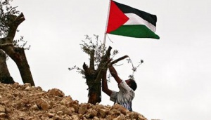 Israel's Land Grab Policy Leaves Palestinians Dispossessed
