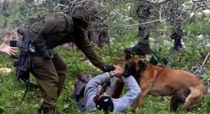 Israeli Army Dog Attacks 92-Year-Old Palestinian Woman in Jenin