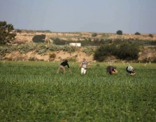 Israel Routinely Attacks Palestinian Civilians in the Buffer Zone