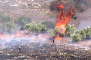 Settlers_burn_trees_in_burin_town